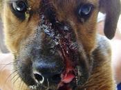 Milo,cachorro cara destrozada machetazo