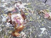 Extraña mutilación pollos conmociona vecinos ciudad Campo Gallo
