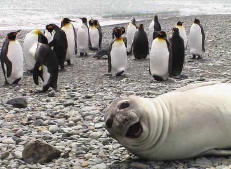 Las 15 mejores fotobombas de todo tipo de animales