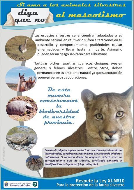 La fauna, la flora, los rios y los lagos generan en Chubut una postal única.