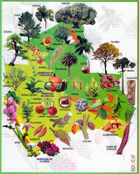 La provincia de Santa Cruz encierra una gran diversidad de especies de flora y fauna autóctonas.