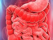 Aparatoso digestivo