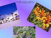 gran variedad relieves paisajes constituyen hábitat fauna flora neuquina.