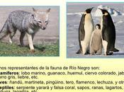 flora fauna Negro está representada especies presentes cuatro ecosistemas.