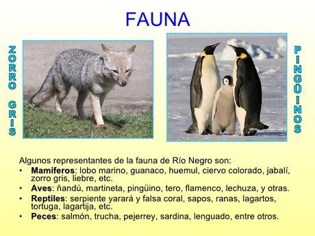 La flora y fauna de Río Negro está representada por especies presentes en cuatro ecosistemas.
