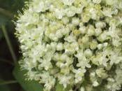 Flores hortalizas