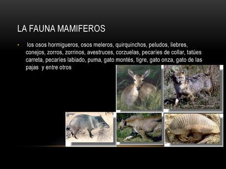 La flora y fauna de Santiago del Estero queda representada por especies como el mistol del monte, atamisqui, cai y mirikina, entre otros.