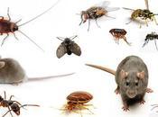 Cómo acabar insectos comunes
