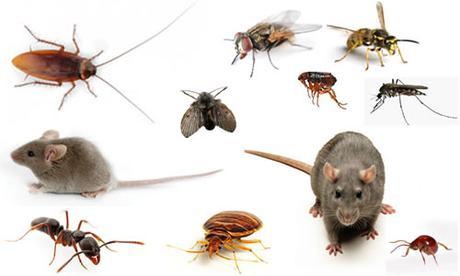 Cómo acabar con los insectos más comunes