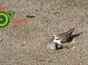 Galería aves urbanas también puedes