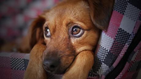 3 cosas que los perros pueden percibir en los humanos