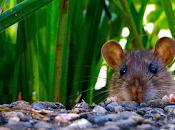 exposición azul incrementa consumo azúcar ratas