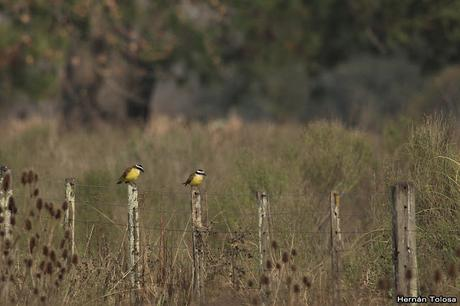 Censo de Neotropical de Aves Acuáticas Laguna de Lobos (julio 2019)