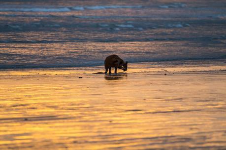 kangaroos-on-the-beach-Cape-Hillsborough-9 ▷ Comente cuándo las redes sociales le roban los momentos de viaje y los recuerdos de Por qué tendrá que hacerlo De ninguna manera Envíe sobre sus vacaciones mientras viaja - Travel-News