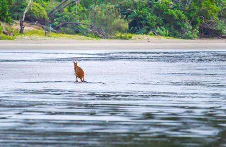 kangaroos-on-the-beach-Cape-Hillsborough-11 ▷ Comente cuándo las redes sociales le roban los momentos de viaje y los recuerdos de Por qué tendrá que hacerlo De ninguna manera Envíe sobre sus vacaciones mientras viaja - Travel-News