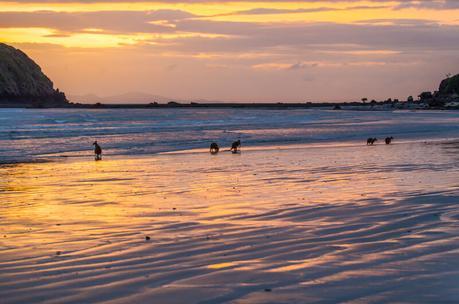 kangaroos-on-the-beach-Cape-Hillsborough-8 ▷ Comente cuándo las redes sociales le roban los momentos de viaje y los recuerdos de Por qué tendrá que hacerlo De ninguna manera Envíe sobre sus vacaciones mientras viaja - Travel-News