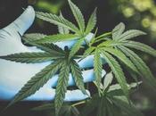 consumidores cannabis podrían propensos olvidarse realizar tareas condiciones estrés
