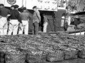 Santoña, Abril 1960:se descargaron 1.541.664 kilos bocarte,registrando record mundial pesca sola especie jornada.