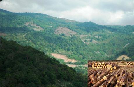 Taladores clandestinos destruyen la serranía de Tamasopo