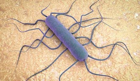 ¿Qué es la Listeria? ¿Cómo se transmite?