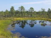 Parque Nacional Lahemaa, excursión perfecta desde Tallin