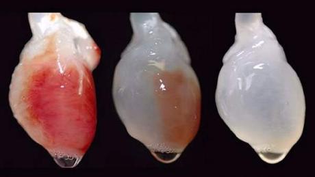Imágenes tridimensionales de órganos completos