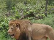 ¿Cómo encontrar Parque Kruger?