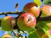 manzanas...