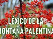 léxico montaña palentina