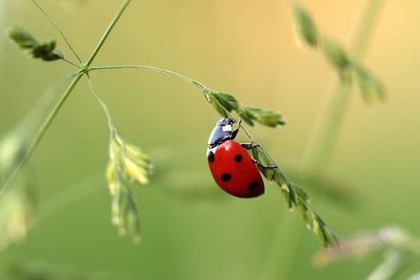 Alemania asigna 100 millones de euros para proteger a los insectos