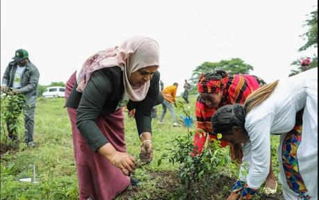 Etiopía: plantan 350 millones de árboles en 12 horas