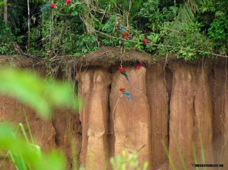 Macaws-Peru ▷ Comente sobre cosas emocionantes que hacer en Perú - itinerario 10 días por Cosas emocionantes que hacer en Perú - itinerario 10 días - Voyage Love