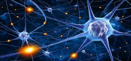 Neurociencia y neuronas