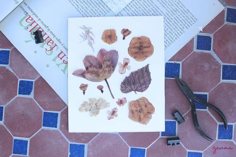 DIY: Cuadro con flores secas