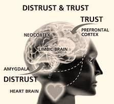 Claves de la confianza II: Liderazgo y biología de la confianza en la organización.