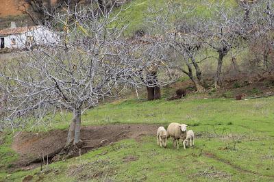 Becas Desarrollo Rural, Innovación y Política Forestal