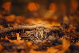 Ratones en otoño