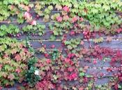 Para lunes otoño…