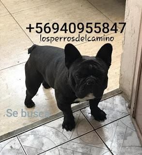 Buscamos a Lupito