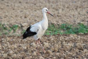 La fauna del parque Apenino-Lucano, un vasto sistema de áreas protegidas.