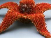 Esculturas diferentes cómo reciclar lápices color