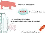 Carne artificial: carne para dominarlos todos