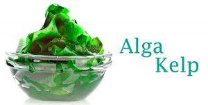 alga kelp superalimento