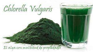 clorella vulgaris el alga con más beneficios