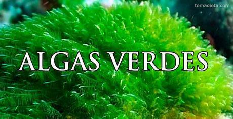 algas marinas verdes