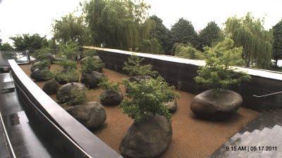 El jard n que crece en piedras paperblog for Caracol de jardin de que se alimenta
