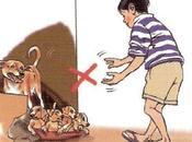Cómo cuidar pequeños mordeduras perros