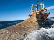 ruina pescadores artesanales