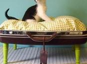 Camas para gatos cost