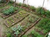 Huerto casa: cómo hacer huerta orgánica casera morir intento